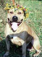 Asti Dog House Gertsog Staf