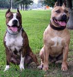 Greta Garbo & Asti Dog House Zigfrid Rivs